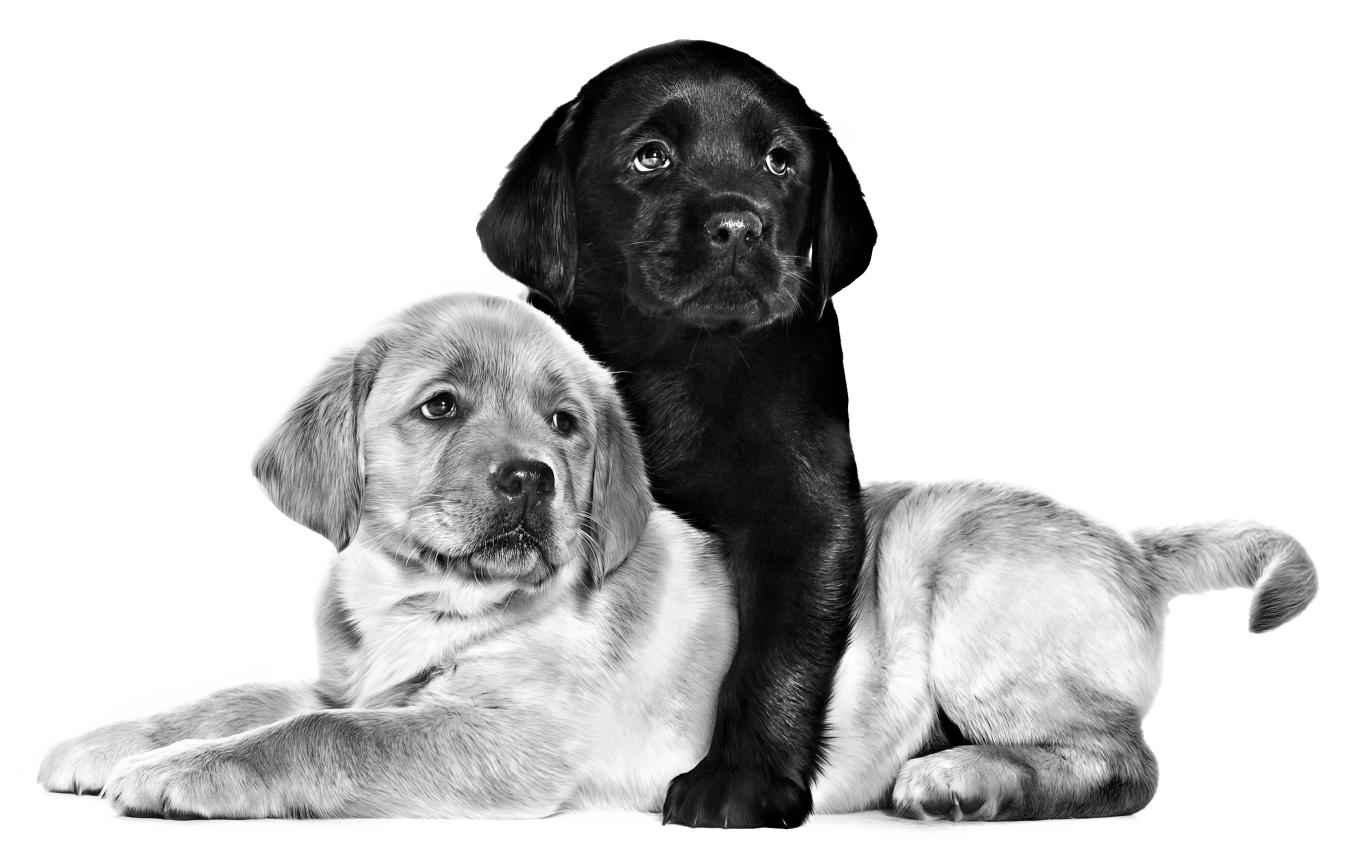 puppyies