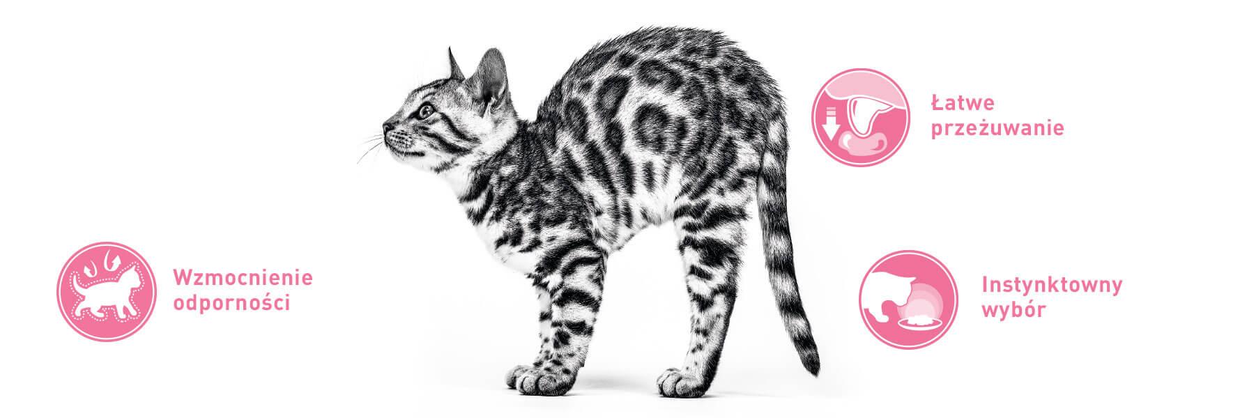 cat-before